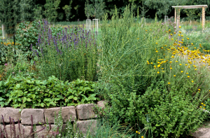 Wildblumen und Gewürze in einem Bauerngarten