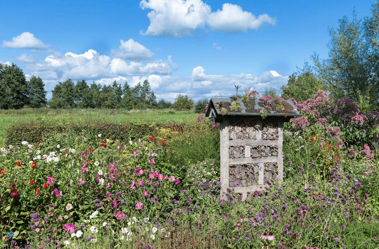 Wilder Garten mit unterschiedlichen Blumen