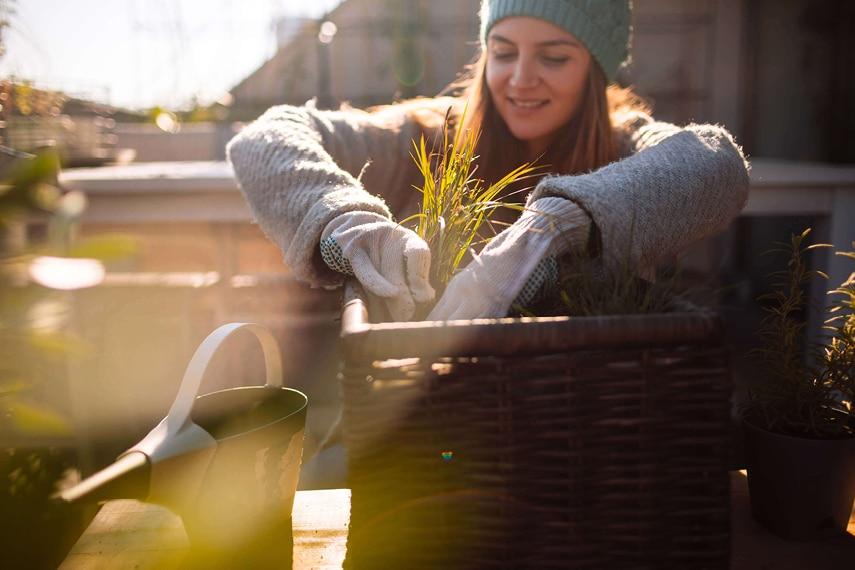 Pflanzen auf Balkon und Terrasse: So klappt die Überwinterung